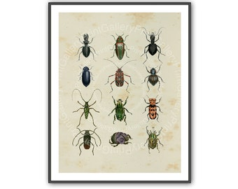Creepy Crawlies Natural History Insects Beetles Print Entomology Book Plate Home Decor Antique Engraving Old Bugs Wall Art Decoration ak 125