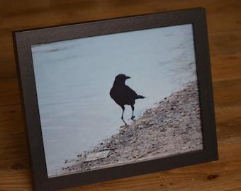 FRAMED Black Bird Silhouette Photographic Print - 10x8