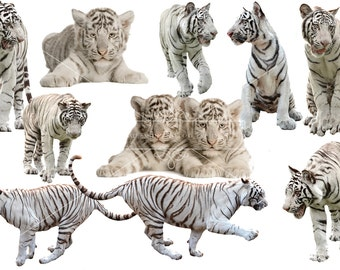 White Tiger Overlays, Separate Png's with Transparent Backing, High Resolution, Instant Download.