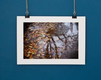 Autumn Nature Photography Fine Art Print Cardiff Roath Park