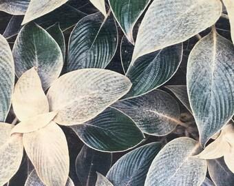 Wooden Prints, Nature Prints, Botanical Cards, Wood Art, Eco Cards, Botanic, Gift Cards, Nature Cards, Botanical Art, Botanical Prints, Eco