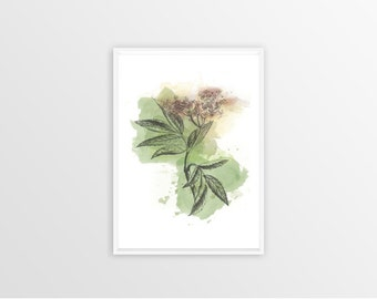 A4, Elder, Wall art, Decoration, Home decor, Print, Mural Art, botanical, watercolor