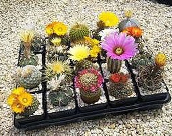 Cactus Mix - 13 Varieties (50 SEEDS)