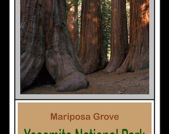 Mariposa Grove - Yosemite National Park