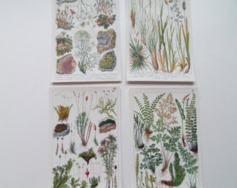 Mosses & Lichens set of 4 Botanical Vintage bookplates- dated c1920 13cm x 20cm