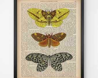 Wall art, Insect decor, Upcycled, Moth art, Insect dictionary print, Digital download art, Printable wall decor, Illustration vintage, JPG