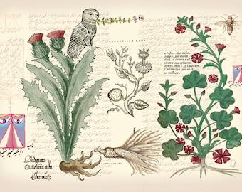 Flowering cactus botanical art print, botanical illustration, antique botanical prints, vintage botanical print, botanical poster