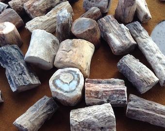 Petrified Wood Limb Cast- Finger Size Limb Cast 'Twig'