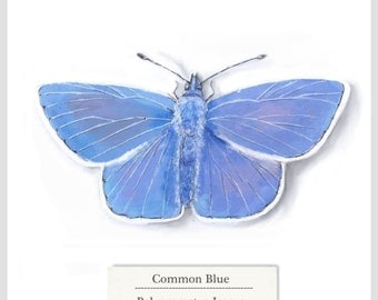 Common Blue - Butterfly - Print - Original Acrylic Painting - 15.6 x 15.6cm