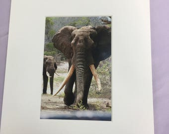 Wildlife Prints, Animal Prints, Mounted Prints, Elephant, Giraffe, Lion, African Wild Dog, Charity Prints, Wild Tomorrow Fund