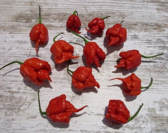 Carolina Reaper Red / Red current world record, world-record - 10 seeds/seeds
