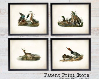 Vintage John James Audubon. Vintage Duck Prints. Audubon Prints. Dining Room Art. Living Room Art. Kitchen Art Decor. Farmhouse Decor. 127