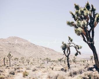 Joshua Tree Photograph, Fine Art Print, California, USA, Road Trip, West Coast, Color, Desert Landscape