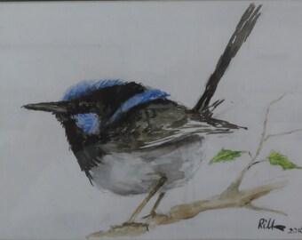 Blue Wren Watercolour
