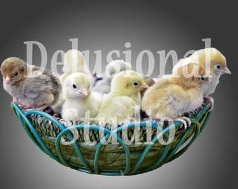 Baby Chicks in a Bowl Digital Overlay