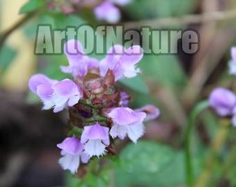 Digital: Nature Photography Flower