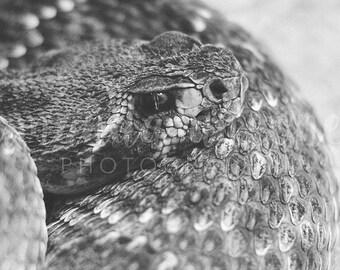 Snake Details — Digital