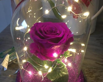 Purple Beauty and the Beast rose.