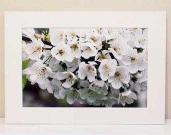 Mounted Photograph of White Apple Blossom