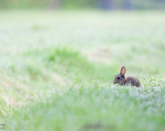 Baby rabbit in the morning dew