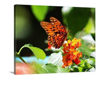 Butterfly Canvas, Photography, Gallery Wrap, Nature Photography, Orange, Green, Gulf Fritillary, Flower, Wall Hangings, Home Décor, Nature