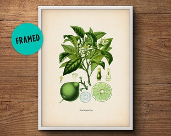 Framed botanical, Citrus print, Bergamot, Kitchen decor, Citrus print, Kitchen art, Vintage botanical, Framed art, Framed print, Wall art