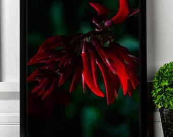 Red flower, digital art.