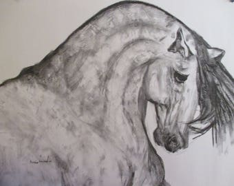 original charcoal sketch by Bernice  Lavender   PROUD DAPPLED HORSE