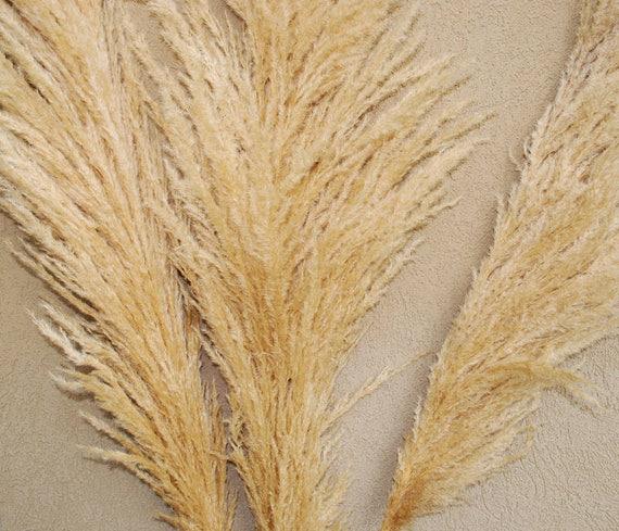 Dried Pampas Grass Natural Pampas Grass Wedding Decor