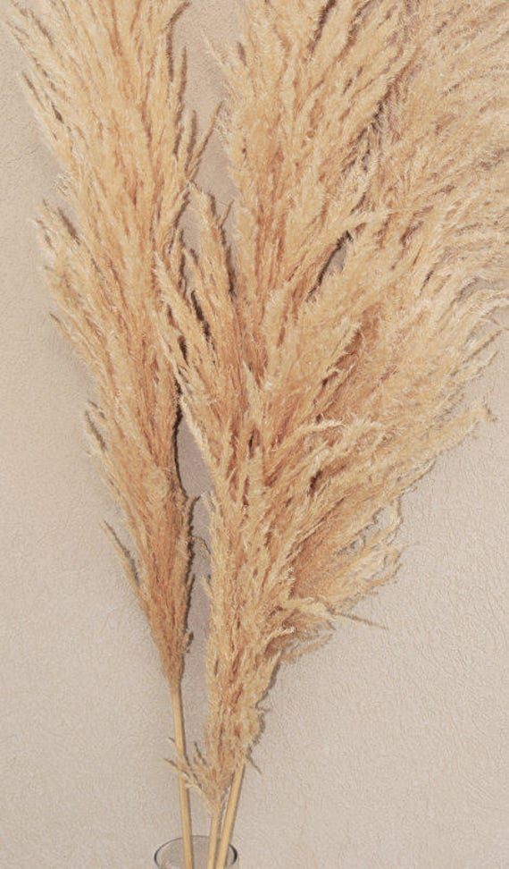 Dried Pampas Grass Natural Pampas Grass Wedding Decor