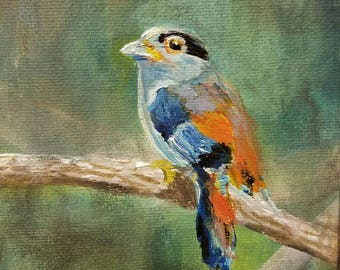 Silver breasted broad beak bird painting on canvas board original small