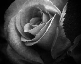 Rose Photo Print