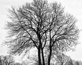 Single tree silhouette  - black and white photograph , Monochrome tree photograph, Black and white photographic print