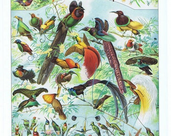 Hummingbird.Bird.Antique.French.Book Page.Original.Colour Plate.Color.Pretty picture.Vintage.Home Deco.Birthday Gift.art.eco.boho.exotic.mom