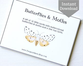 School Room Printable - Butterflies & Moths Learning Cards - Home School Art, Montessori, Educational Wall Art, Insects, Nature Table