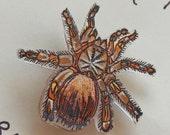Tarantula Critter Pin
