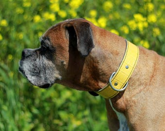 Yellow Gator Embossed Leather Dog Collar - Yellow Leather Dog Collar -Rad N Bad Collars - Handmade Yellow Dog Collar - Leather Dog Collar