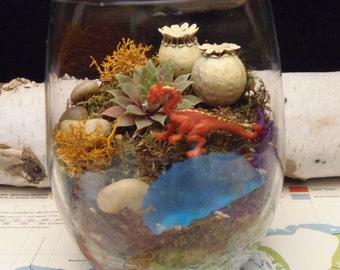 Red Dragon Moss Terrarium, Great Low light, office, dorm rooms, hospital rooms