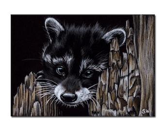 "RACCOON 21 kit baby woodland critter raton laveur painting pencils Sandrine Curtiss ORIGINAL Art 5x7"""