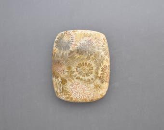 Agatized Coral Cabochon