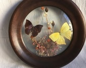 Vintage butterfly art  round glassed butterfly display   Naturalist collection