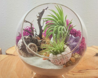 Air Plant Terrarium Kit by Midnight Blossom - DIY Mini landscape Featuring Live Tillandsia, Colorful Seashells and Lichen, Amethyst and More