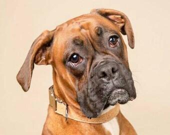 Dog Collar Tan, Cork Leather, Puppy Collar, Designer Dog Collar, Large Dog Collar, Small Dog Collar, Medium Dog Collar
