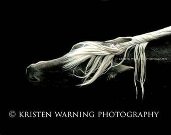 Custom Order, Equine Photography, Metal Print, 40x60 inches