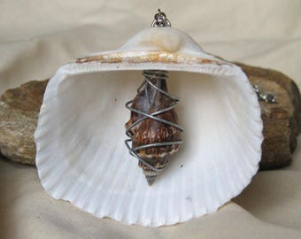 Hand Made Seashell Charm Necklace with a Wire Wrapped Shell Charm