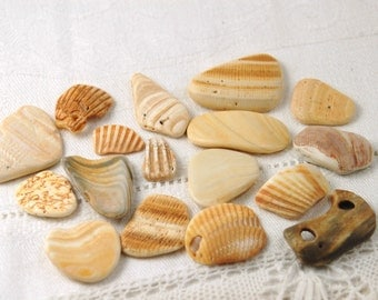 17 smooth colorful clam and cockle seashell pieces (no.211)