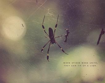 Black Spider, Spider Photo, Spider Photography, Spider Art, Spider Print, Spider Lover, Spider Gift, Spider Web Art, Spider Web Photo