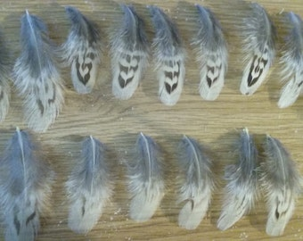 Pheasant Feathers Variety - Pheasant Hen - 60 DYI Feather Supplies - Excellent Condition - Elusive Wolf