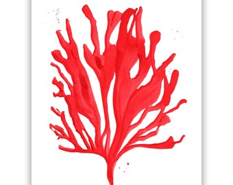 """Red Coral no. 2 Seaweed Coral Watercolor Giclee Print of Original Painting 5 x 7"""", 8 x 10"""", 11 x 14"""", 13 x 19"""""""