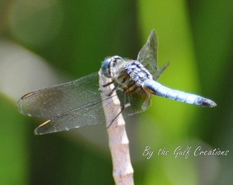 Dragonfly, Plant, Nature Photography, Insect, Glossy, Fine Art Photography, 8x10, Matted